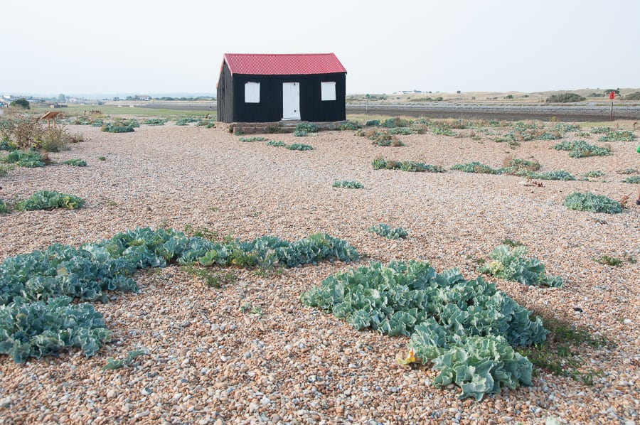 Red hut at Rye Harbour