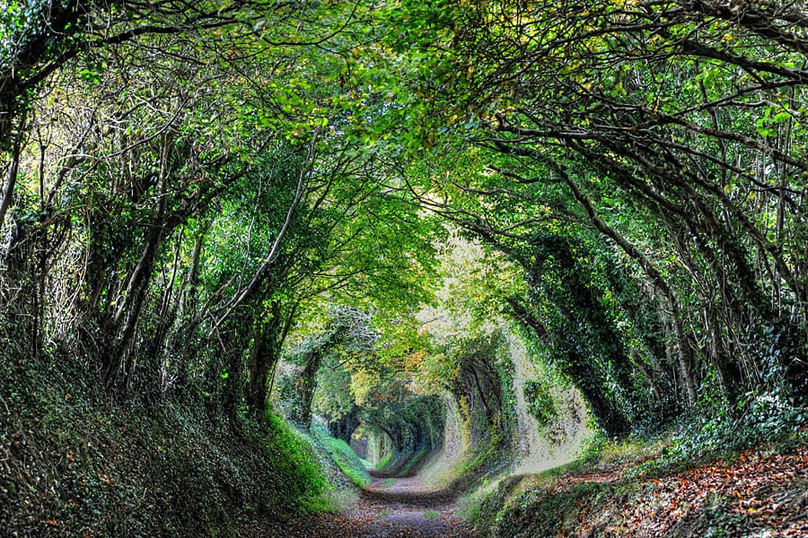 A magical tree tunnel, the path to Halnaker Windmill in West Sussex, England