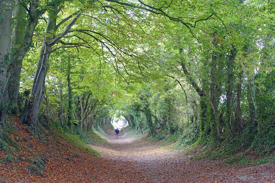 The tree tunnel on Mill Lane, Halnaker, West Sussex, England