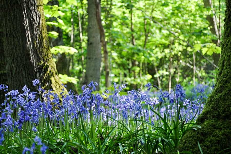 Into the Blue – Bluebell Woods in Sussex