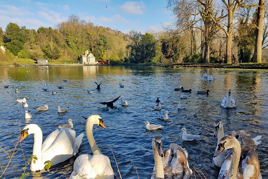 Swanbourne Park, Arundel, West Sussex